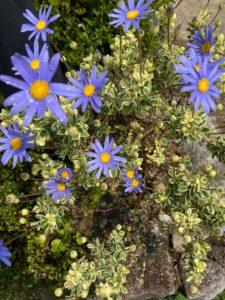 """<span class=""""title"""">春はガーデナーに幸せな季節。庭の南東には香るハーブなどで人脈運アップ!</span>"""